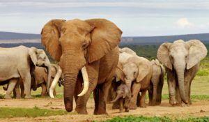 Los animales grandes