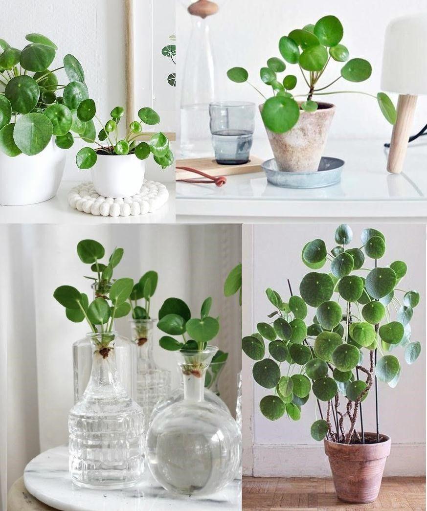 Plantas para interiores for Plantas ornamentales para interiores